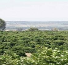 Vista Finca citricos en Huelva