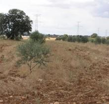 finca agricola