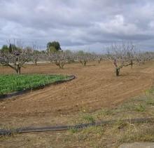 finca agrícola